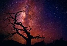 """Tree of the Universe"" Photograph by Peter Lik"