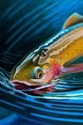 """Yellowstone Cutty"" giclee on canvas by AD Maddox"