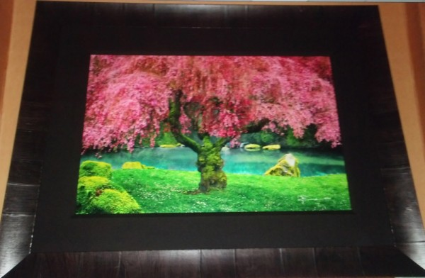 """""""Tree of Dreams"""" Framed Photograph by Peter Lik"""