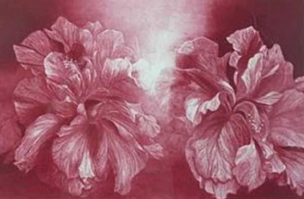 """Hibiscus"" mezzotint by G. H. Rothe"