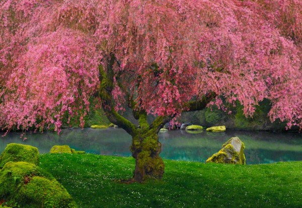 """Tree of Dreams"" Photograph by Peter Lik"