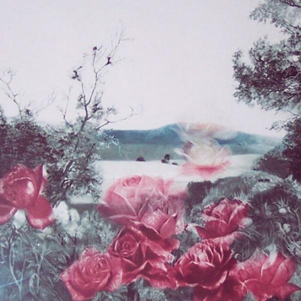 Rosecape Mezzotint by G. H. Rothe